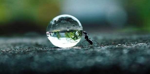 persistencia-formiga